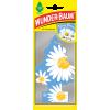 Doftgran Daisy Flower